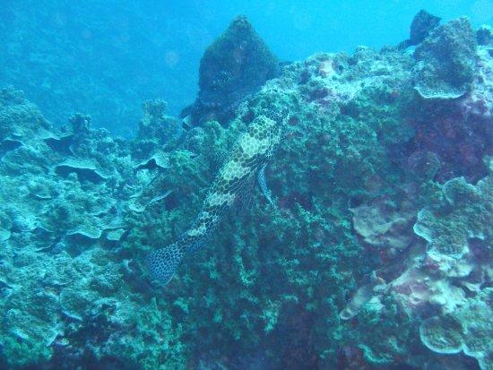 Eleuthera Bora Diving Center: Loche rayon de miel