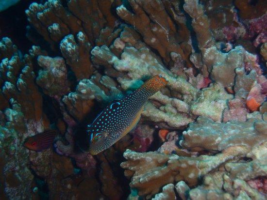 Eleuthera Bora Diving Center: Poisson observé pour la première fois