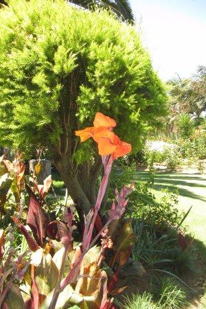 Robertson, Sudafrica: garden