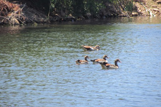 Robertson, África do Sul: bird life in the water