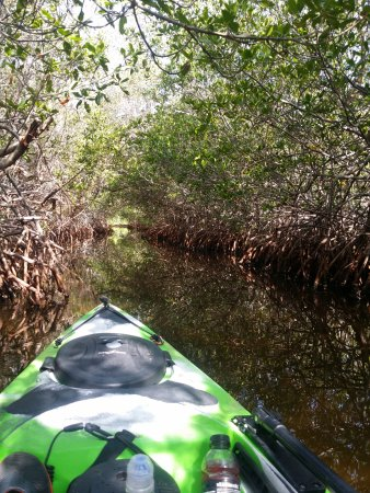Kayak Charters: Our Eco Tours are an adventure into Florida's Back Country Essturaries