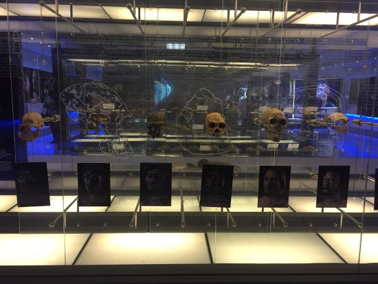 Cradle of Humankind World Heritage Site Φωτογραφία