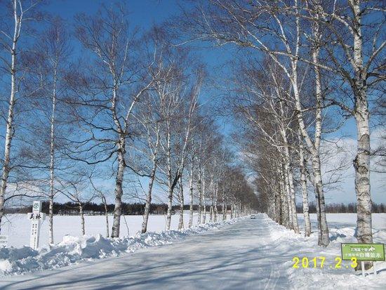 Otofuke-cho, Japan: 快晴の雪景色に映える白樺並木