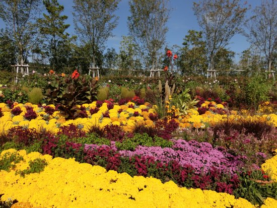 Gamagori, Japão: フラワーラグーン (10月)