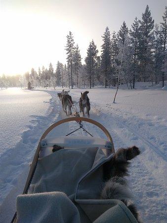 Lapland Hotel Saaga: Sortie traineau à chiens