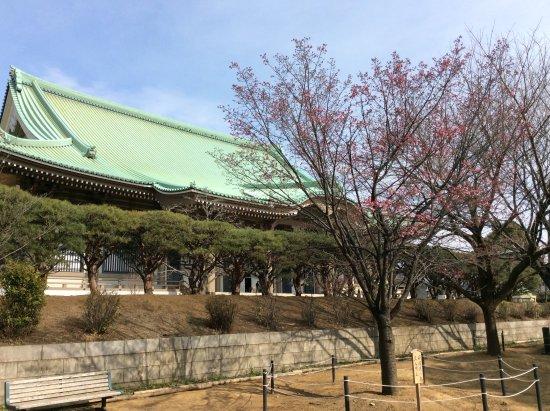 Soji-ji Temple: 紅梅に大祖堂
