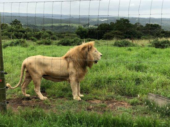 East London Lion Park