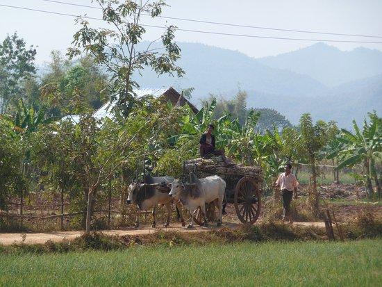 Kalaw, Myanmar: Landscape day 3