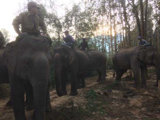 Ban Xieng Lom, Laos: Picking up the elephants from the jungle
