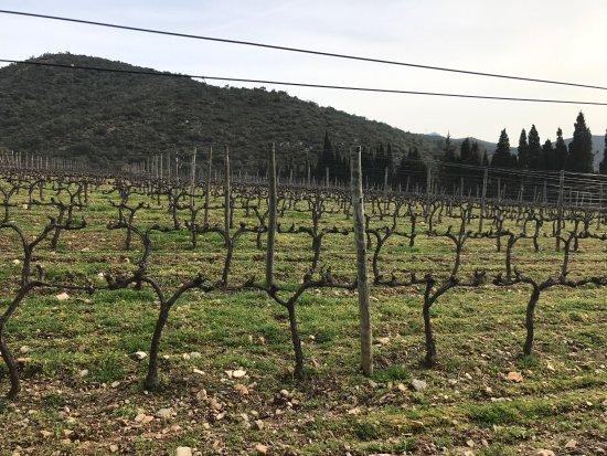 Cantallops, Ισπανία: photo3.jpg