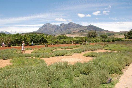 Западно-Капская провинция, Южная Африка: toller Ausblick