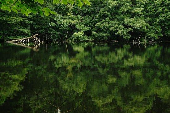 Koigakubo Wetlands