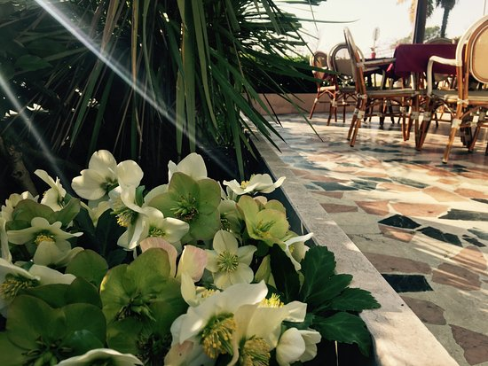 Fiori in terrazza - Picture of Hotel San Marco, Garda - TripAdvisor