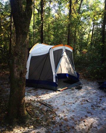 Carolina Beach State Park: Campsite at Carolina beach