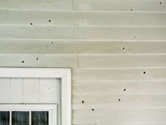 Franklin, TN: Civil War bulletholes in wall of the Carter House. (Wes Albers)