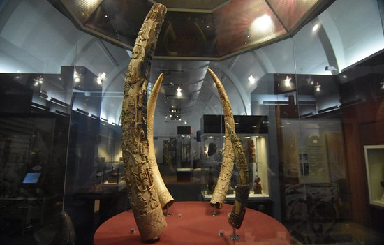 World Museum: Ivory display