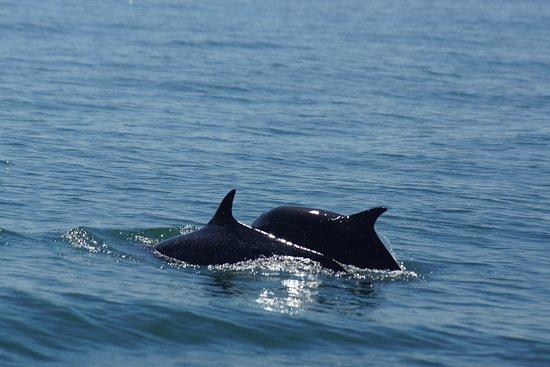 Drake Bay, Costa Rica: deux dauphins parmi un groupe .