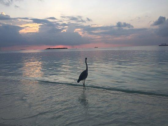 達盧環礁照片