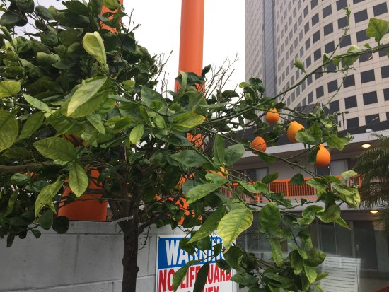 The Tangerine: photo2.jpg