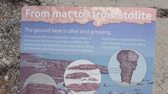 Hamelin Pool, Australia: Some info on the Stromatolites