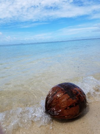 Sea Change Villas: Coconut on the beach in front of our villa - these were commonly seen!