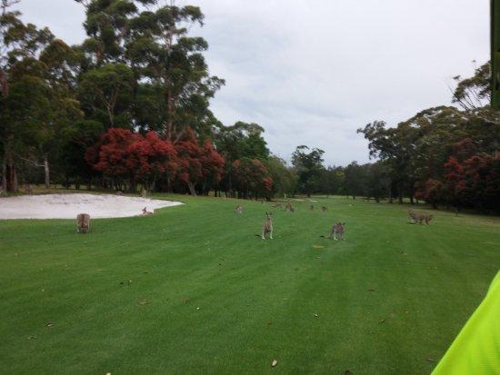 Nelson Bay, Australia: The Golf Course