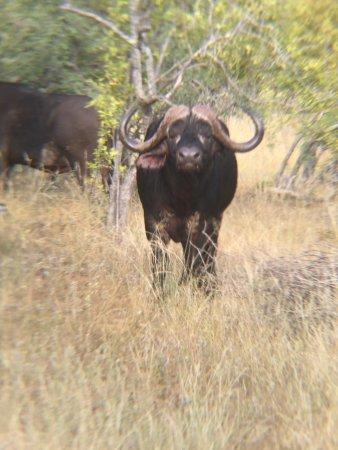 Balule Nature Reserve, Zuid-Afrika: Naledi Bushcamp and Enkoveni Camp