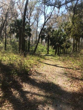 Silver Springs, FL: photo7.jpg