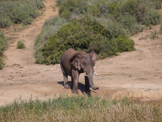 Addo Elephant National Park, Sudáfrica: photo2.jpg