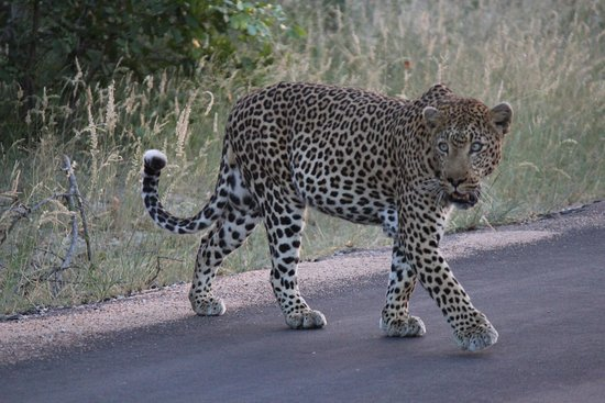 Timbavati Private Nature Reserve, South Africa: photo1.jpg