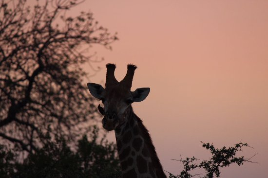 Timbavati Private Nature Reserve, South Africa: photo2.jpg