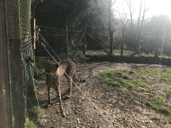 Exmoor Zoo: photo0.jpg