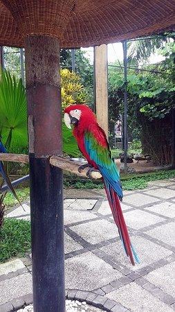 Bali Bird Park: Парк Птиц