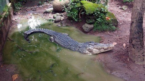 Bali Bird Park: Парк Рептилий, Бали