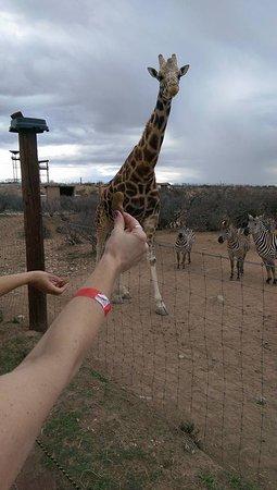 Camp Verde, AZ: African Safari Tour