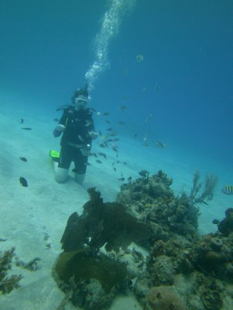 Jamaica Scuba Divers Ltd.: Feeding fish