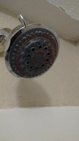Irving, TX: Corroded shower head
