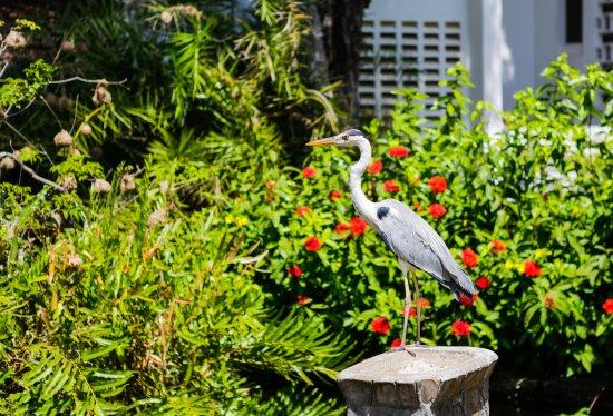 烏龜灣泳灘俱樂部照片