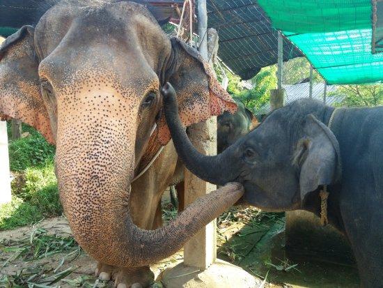 Chalong, Thailand: Elefant-tracking underveis