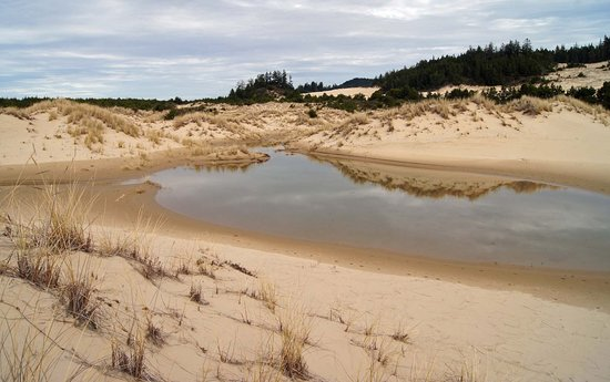 Reedsport, OR: Rainwater pond in the Oregon Dunes