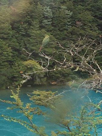 Puerto Bertrand, Chile: photo2.jpg