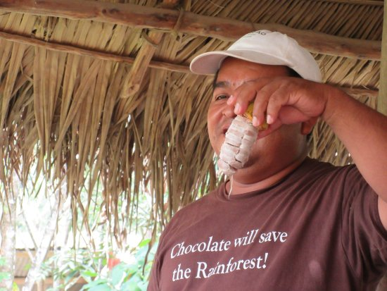 Placencia, Belize: Raw cacao beans from the pod