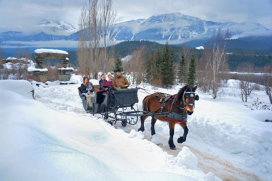 Revelstoke, Canada: Gliding along the river with Sassy our Percheron Mare at the lead