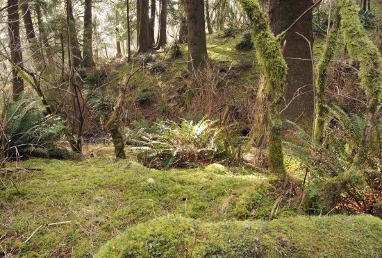 Otis, OR: Old-growth spruce forest on Cascade Head
