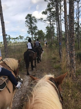Hobe Sound, FL: Morning horseback ride, with two guides and a group of 9 riders