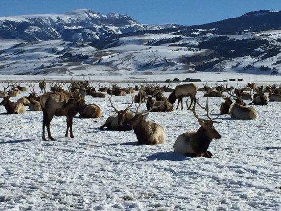 国家麋鹿保护区