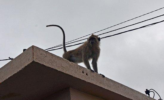 Ganga Talao - Grand Bassin: Home to lots of monkeys