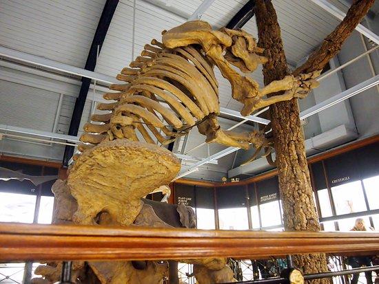 Tring, UK: Extinct giant sloth skelaton
