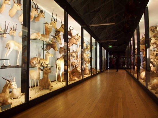 Tring, UK: Beautiful galleries full of creatures.