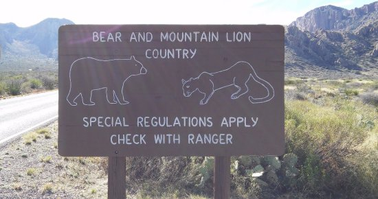 Alpine, TX: Bear & Mountain Lion Country, Big Bend National Park